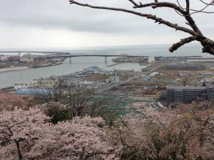 日和山桜満開。 失われた町が見え隠れします。 ここに立つとかなしみといまを生きるよろこびが交錯します。